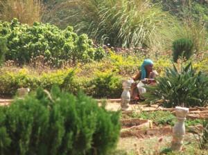 Bangalore Palace gardener