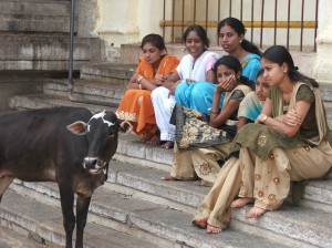"""Holy Cow!"" - outside Chamundi temple"