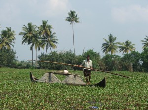Boating on a lake covered with water hyacinth (1)
